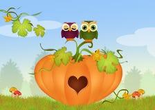 Owls on the pumpkin in a heart shape Stock Photos