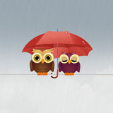 Owls in the rain Stock Photography