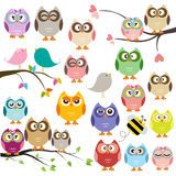 Owls Stock Photo