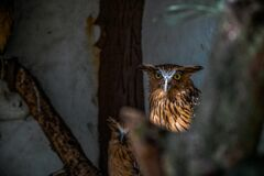 Owls in shade Royalty Free Stock Image