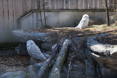 Owls sit  in Zoo. 