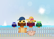 Owls on summer vacations. Illustration of owls on summer vacations Stock Images
