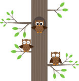 Owls on tree Stock Images