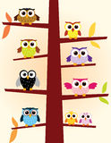 Owls in a tree Stock Photography