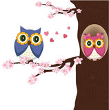 Owls on the tree Stock Image