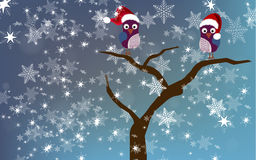 Owls on a tree in winter setting Royalty Free Stock Image