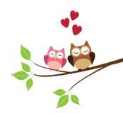 owls två Arkivbilder