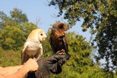 owls två royaltyfri fotografi