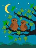 Owls Stock Photo