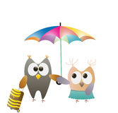Owls and umbrella Stock Images