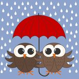 Owls with a umbrella royalty free stock images