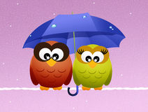 Owls with umbrella Stock Image
