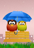 Owls with umbrella Royalty Free Stock Image