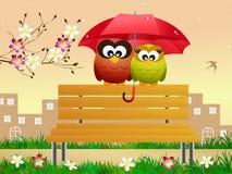 Owls with umbrella Stock Photos