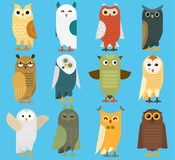 Owls vector cartoon cute bird set owlet character kids animal baby art for children owlish collection isolated on royalty free illustration