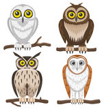 Owls on white background. Stock Images