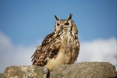owlstenvägg royaltyfri foto