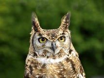 owltawny Fotografering för Bildbyråer