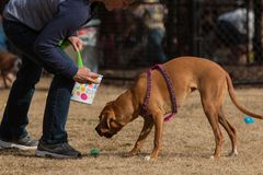 Free Owner And Dog Hunt For Plastic Easter Eggs In Park Stock Image - 142779451