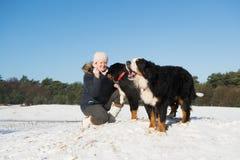 Owner with Berner Sennenhund Stock Photos