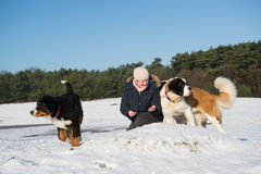 Owner with Berner Sennenhund and Saint Bernhard dog Stock Photography