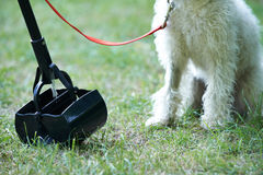 Owner Clearing Dog Mess With Pooper Scooper Royalty Free Stock Photos