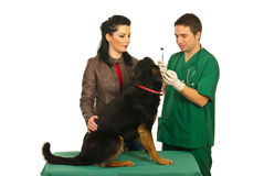 Owner with dog at dentist checkup Royalty Free Stock Images