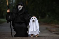 Owner and dog posing for Halloween in costume stock images