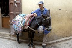 Owner and donkey waiting in Medina of Fez stock photo