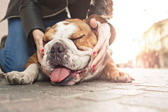 Owner gently caressing her dog in an urban place. Owner gently caressing her bulldog in an urban place stock photo
