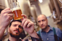Owner inspecting beer in mug. At brewery Stock Image