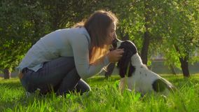 The owner kisses the dog English cocker spaniel. The owner kisses the dog English black-and-white cocker spaniel stock footage