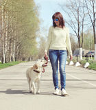 Owner and labrador retriever dog outdoors walking Royalty Free Stock Photos