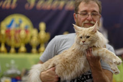 Owner with Maine Coon cat Royalty Free Stock Photography