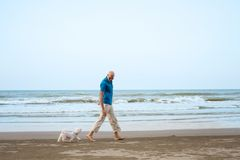 Owner with Maltese dog walking at the beach. And play Royalty Free Stock Photo