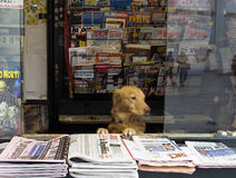Owner of the newsstand Stock Images