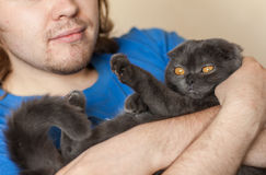 Owner and pet concept - Young man holding a grey Scottish fold cat close-up Stock Images