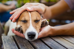 Owner petting dog Royalty Free Stock Images