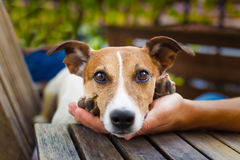 Owner petting dog royalty free stock photo