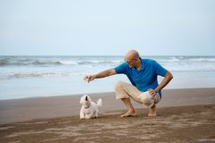 Owner playing with Maltese dog. At the beach royalty free stock image