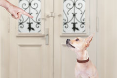 Owner punishing his dog Royalty Free Stock Photos
