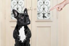 Owner punishing his dog Stock Images