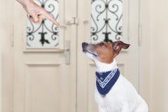 Owner punishing his dog Royalty Free Stock Photo