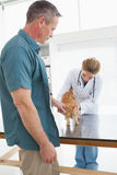 Owner rubbing his cat as vet examines Royalty Free Stock Image