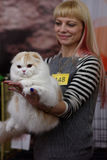 Owner with Scottish fold cat Stock Images