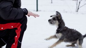 Owner training dog to give five paw and bark exercise. Male dog instructor training domestic pet to give paw and voice