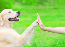 Owner is training her Golden Retriever dog on the grass in park Stock Photos