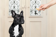 Owner with a treat for dog Royalty Free Stock Photography