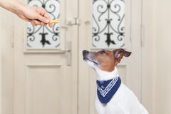 Owner with a treat for dog Stock Images