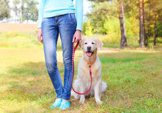 Owner woman with Golden Retriever dog walking together Stock Photo